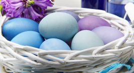 Mavi Yumurta Üretimi