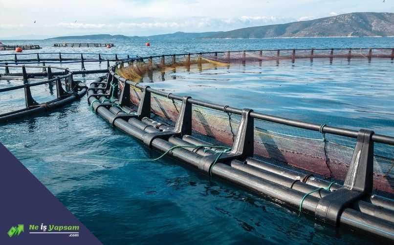 Balık Üretim Tesisi Kurmak