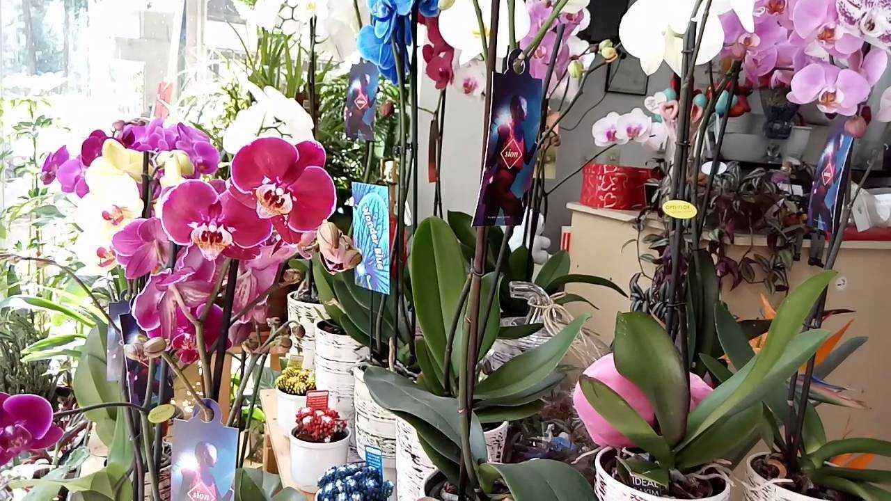 Çiçekçi dükkânı