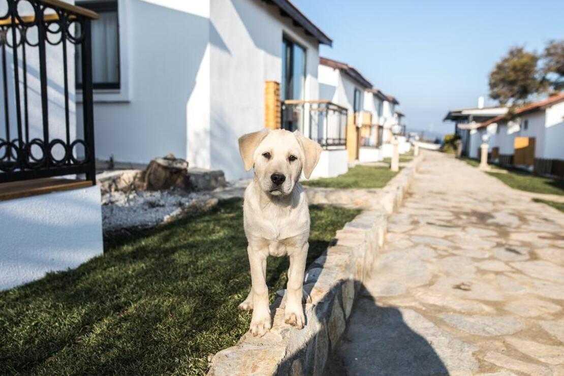 Köpek Oteli Kurmak