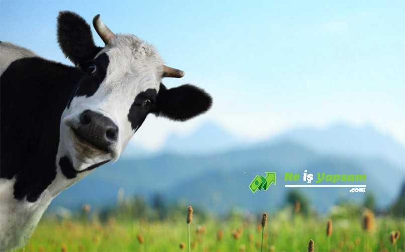 Hayvancılık kredisi nedir
