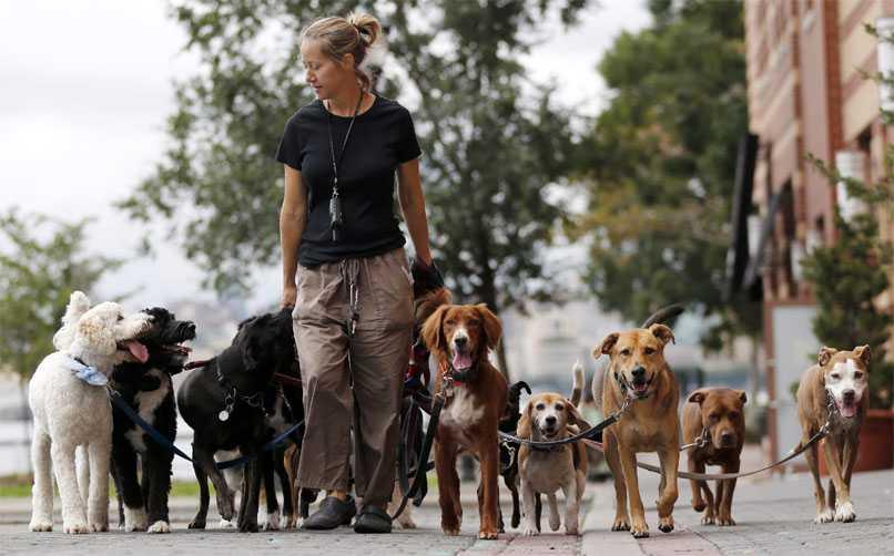 kimler köpek gezdirme hizmetinden yararlanabilir