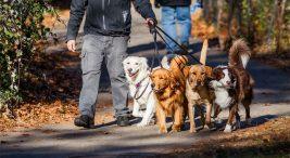 köpek gezdirme hizmeti vererek para kazanma