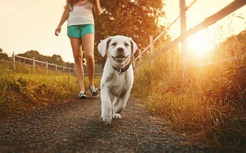 Köpek Ne Zaman Gezdirilmelidir?