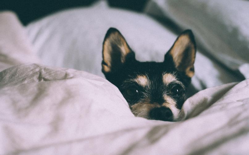 köpek bakıcısına neden ihtiyaç duyulur