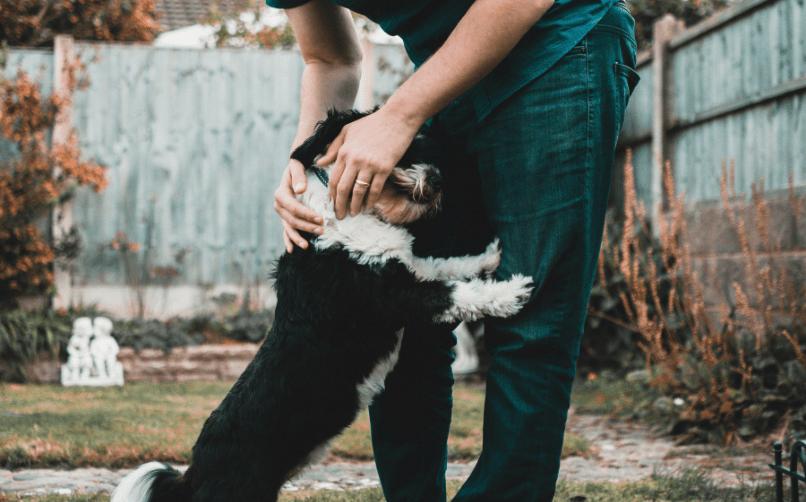köpek bakıcısının görevleri