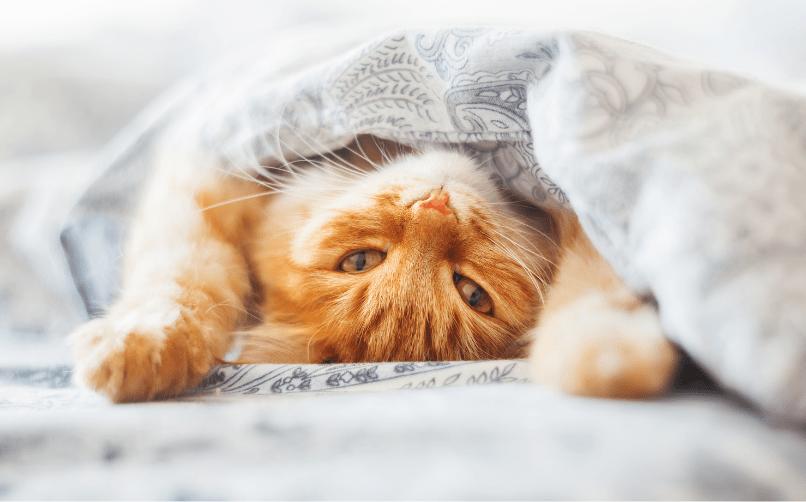 Kedi bakıcılığı yaparak para kazanma