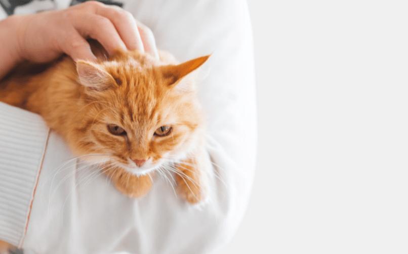 Kedi bakıcısının görevleri