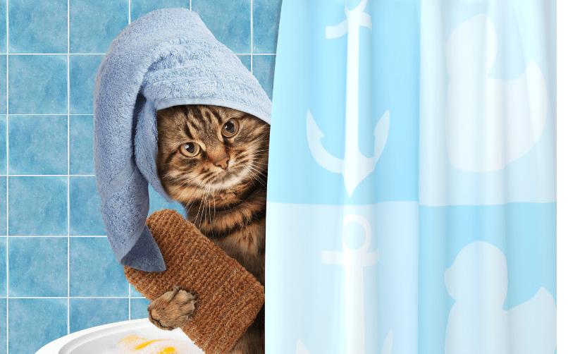 Kesinlikle banyo ettirmeyin