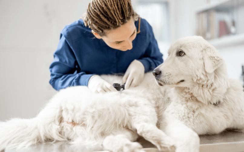 veterinere götürmek